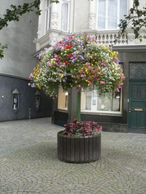 Beautiful flowers in teh Aachen